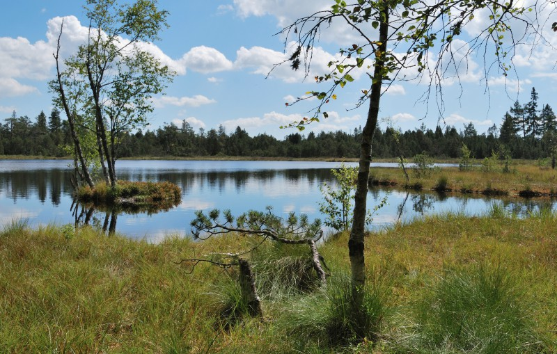 bad-wildbad-vom-sommerberg-zum-wildsee-und-zurueck