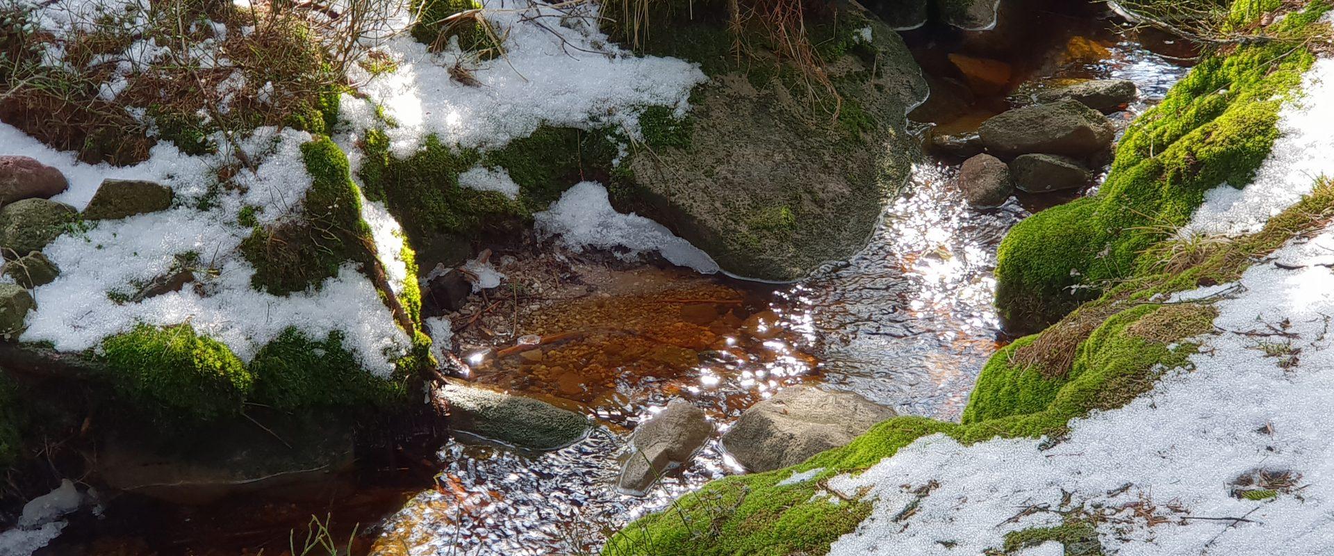 Bad Wildbad: Vom Sommerberg zum Wildsee und zurück